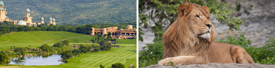 10 Day Sun City Kruger Package